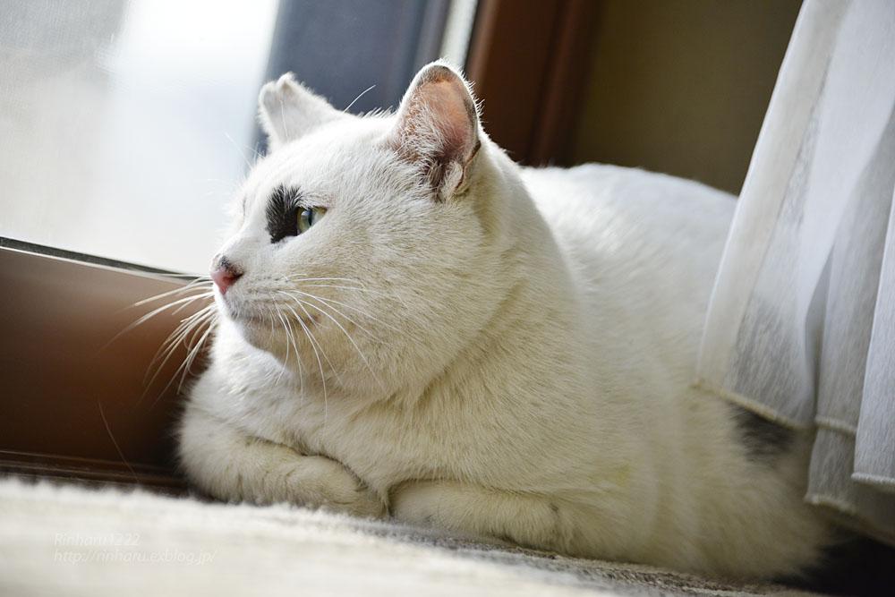 2018.12.2 我が家の猫☆くぅちゃん【Cat】_f0250322_2049361.jpg