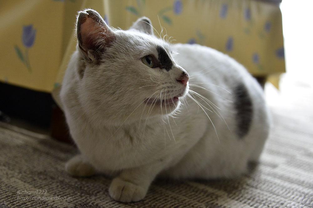 2018.12.2 我が家の猫☆くぅちゃん【Cat】_f0250322_20494947.jpg