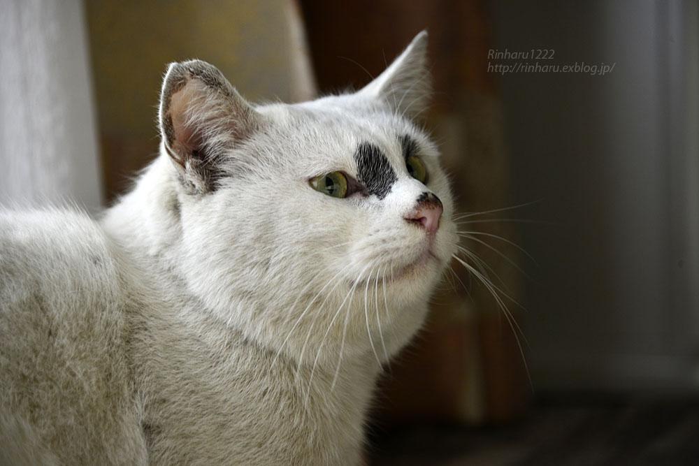 2018.12.2 我が家の猫☆くぅちゃん【Cat】_f0250322_20495557.jpg