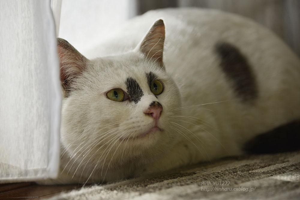 2018.12.2 我が家の猫☆くぅちゃん【Cat】_f0250322_2049915.jpg
