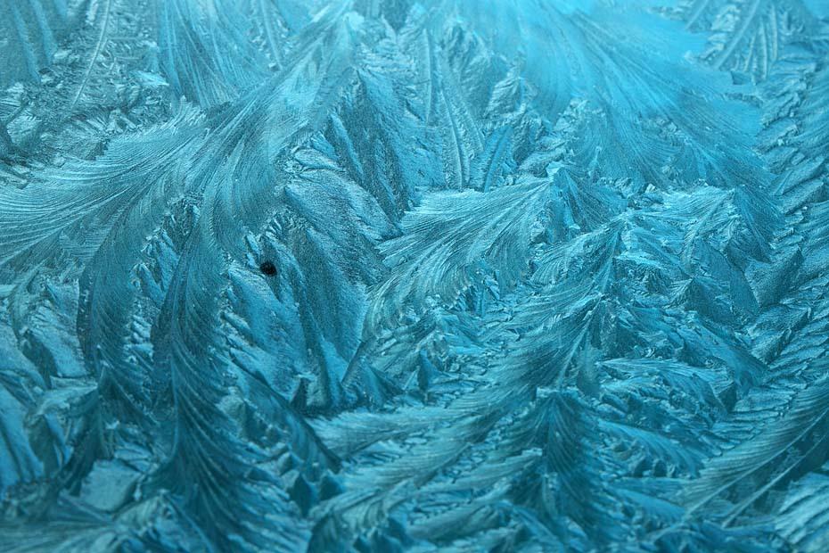 霜降る朝 #4_c0067040_21593763.jpg