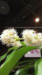 花が咲きました☆_d0118053_15081456.jpg