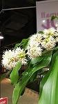 花が咲きました☆_d0118053_15101053.jpg