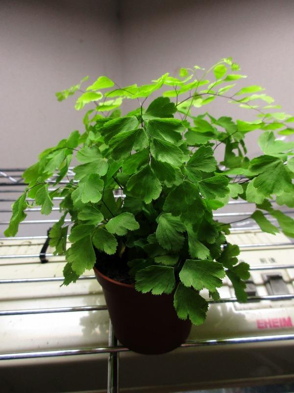 植物「白雪姫」_b0362459_20230618.jpg