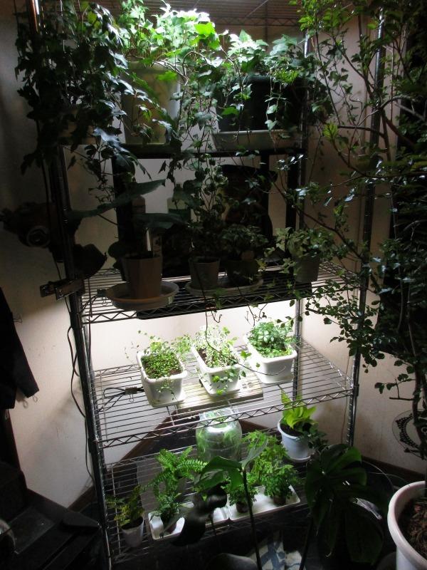植物「白雪姫」_b0362459_20303912.jpg