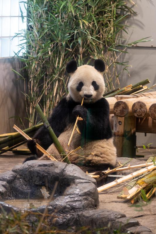 初めてのパンダ撮る_a0261169_23291322.jpg