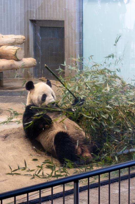 初めてのパンダ撮る_a0261169_23294653.jpg