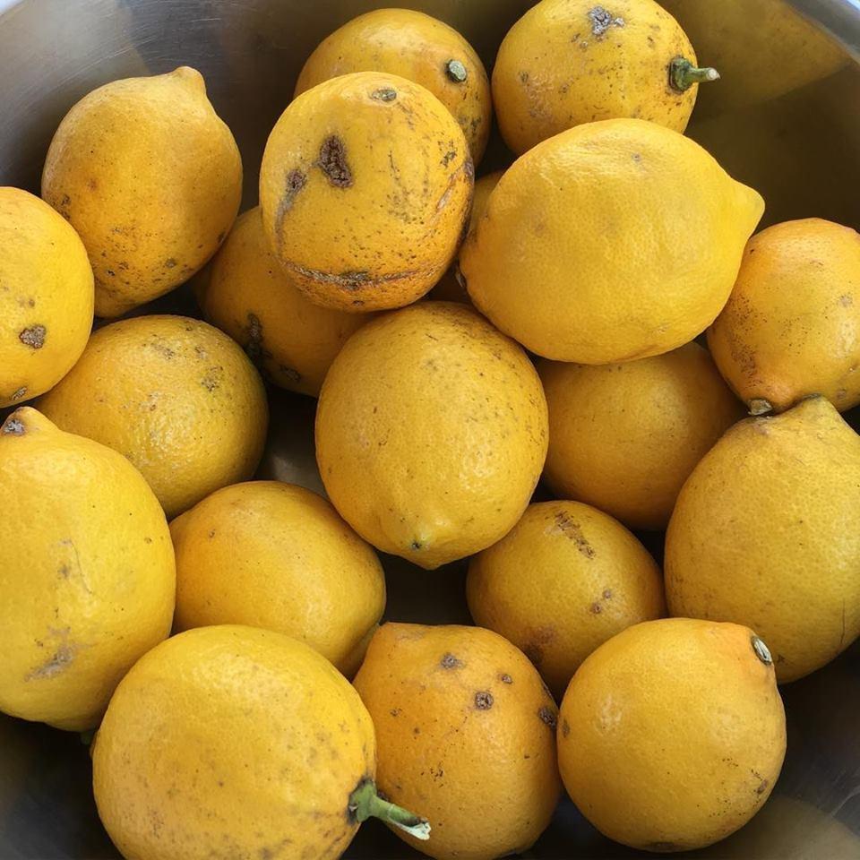 自然栽培のレモン_c0172969_16482483.jpg