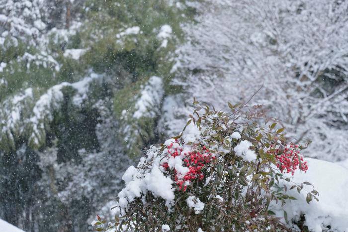 京都 大原雪景色 2019_f0021869_13493008.jpg