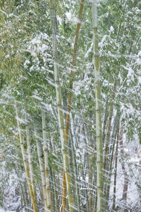 京都 大原雪景色 2019_f0021869_13493123.jpg