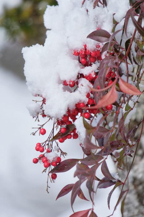京都 大原雪景色 2019_f0021869_13493143.jpg