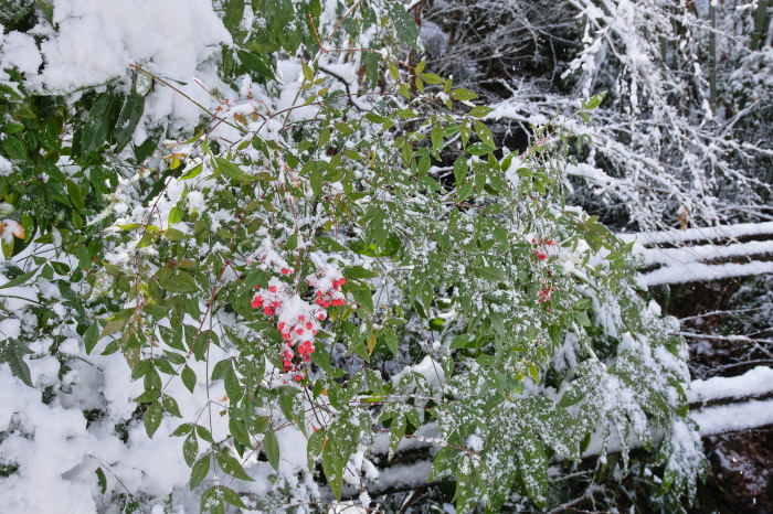 京都 大原雪景色 2019_f0021869_13493243.jpg