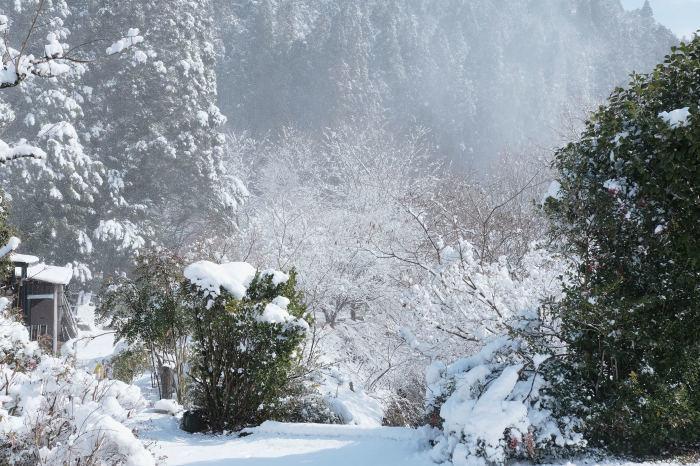 京都 大原雪景色 2019_f0021869_13493469.jpg
