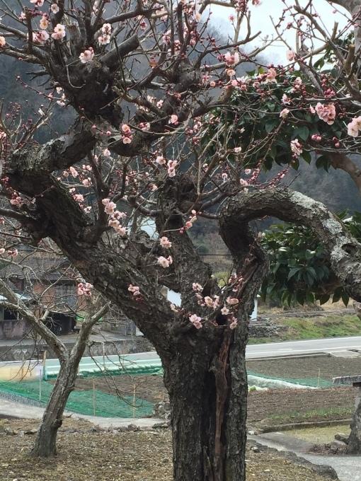 梅を見ながら_a0125981_19002587.jpeg