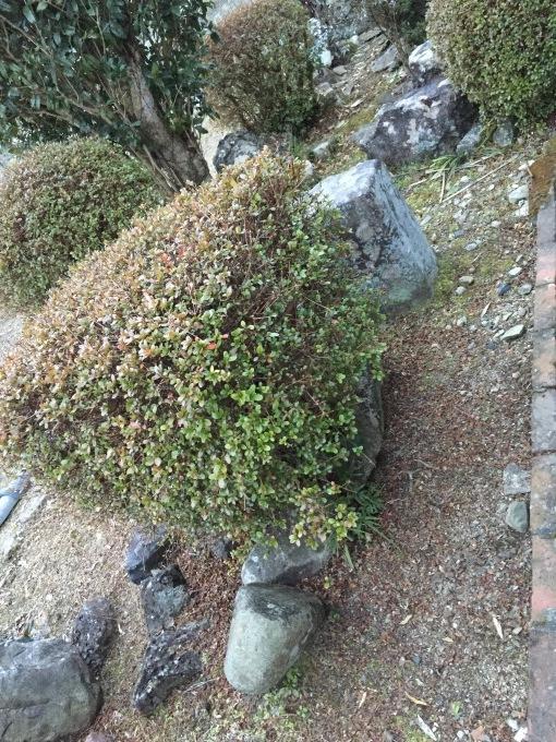 梅を見ながら_a0125981_19084912.jpeg