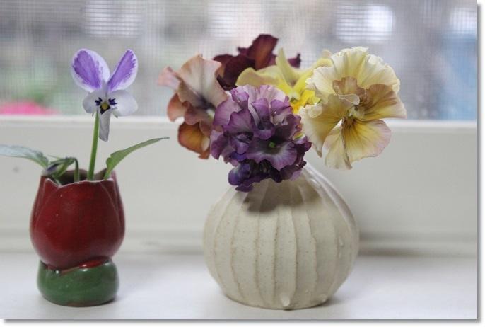 ビオラの花を飾ってみた♪ - すきな ことに かこまれて