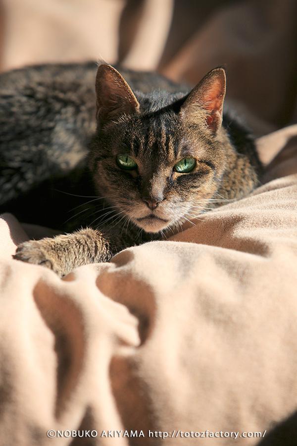 猫の日_a0034287_18124274.jpg