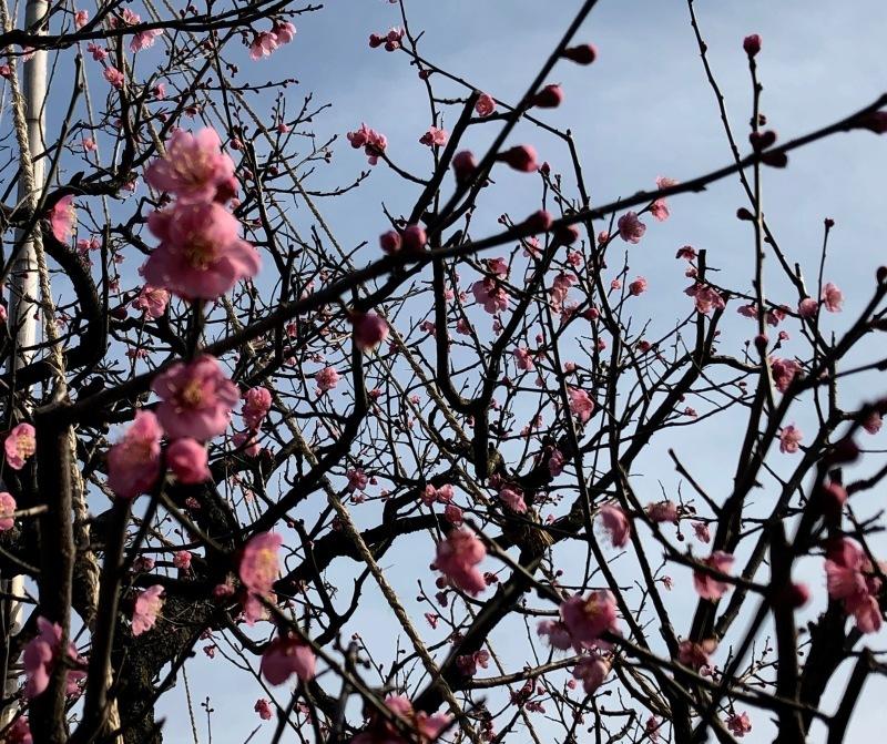 加賀の庭園_c0006305_14524772.jpg