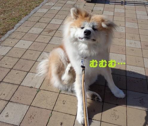 f0121712_01051223.jpg