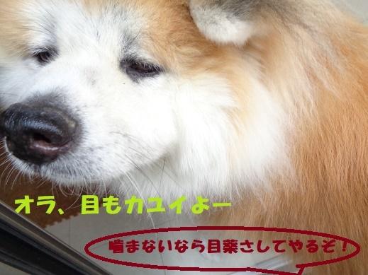 f0121712_01113839.jpg
