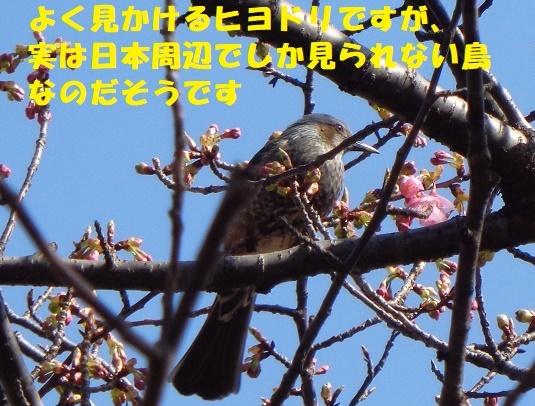f0121712_01284623.jpg