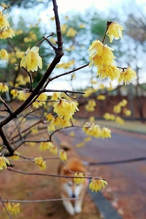 春はそこまで_b0314043_08120191.jpg
