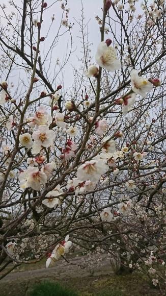 春がそこまで_f0331145_14425171.jpg