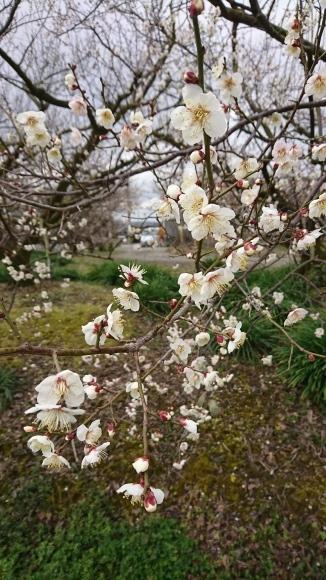 春がそこまで_f0331145_14431369.jpg