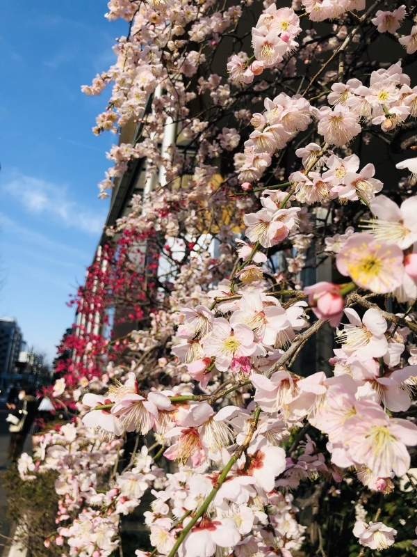春はまだか。   &2月25日(月)のランチメニュー_d0243849_18464885.jpeg