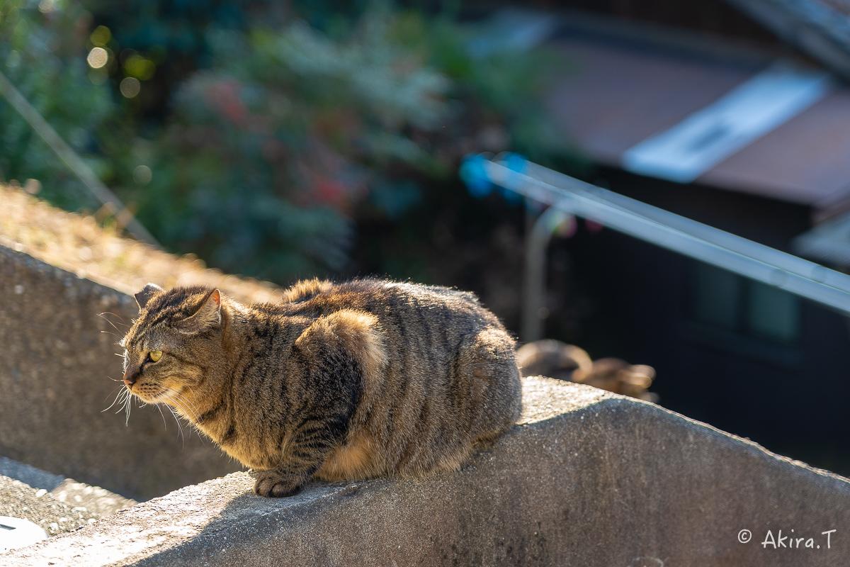 〜岩合光昭に挑戦〜 京都ネコ歩き -20-_f0152550_17510466.jpg