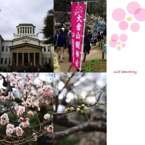 大倉山観梅会 2019_c0156468_16304033.jpg