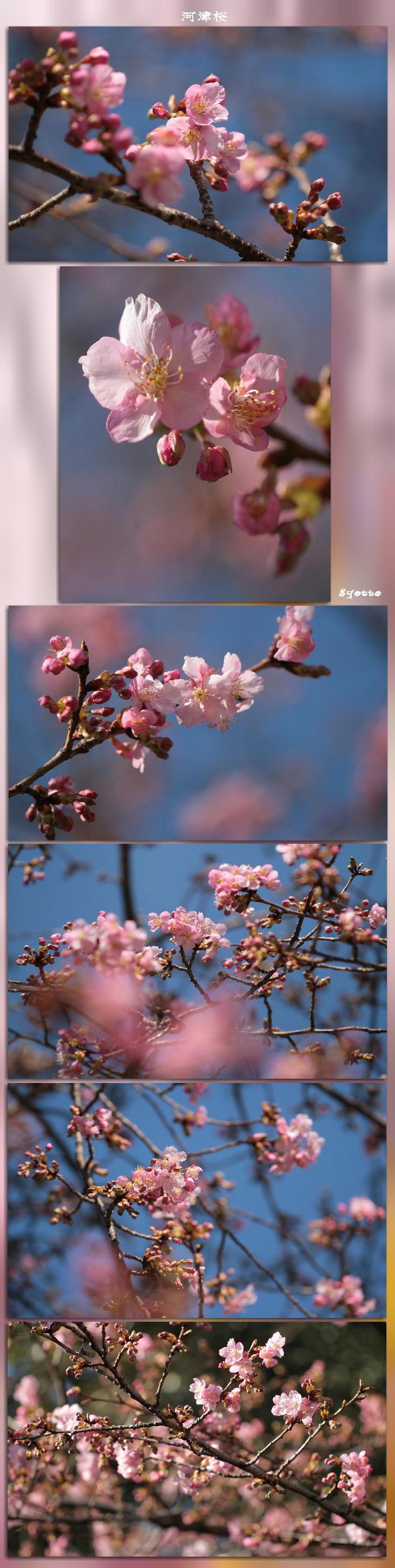 f0164592_17530148.jpg