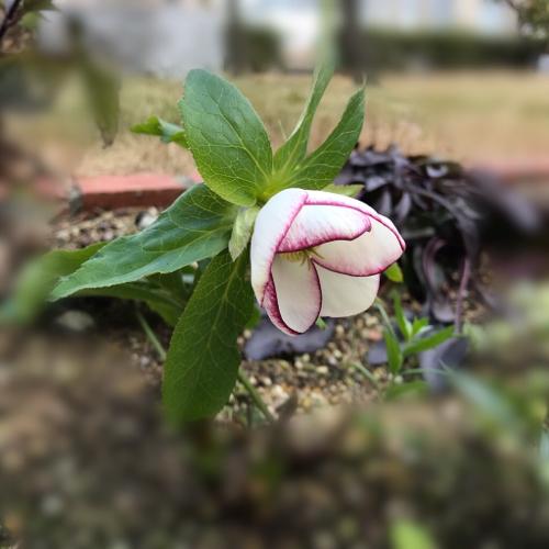 春がはじまっています_a0139105_22581595.jpg