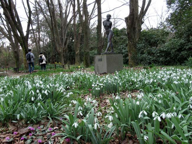 植物園 春の草花が咲き始めた_e0048413_20092370.jpg