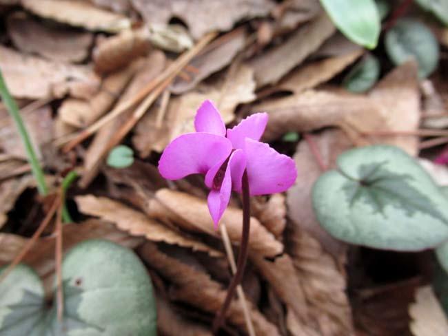 植物園 春の草花が咲き始めた_e0048413_20093548.jpg