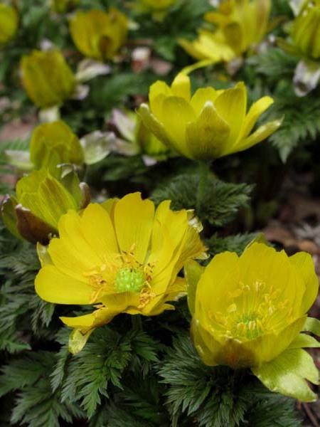 植物園 春の草花が咲き始めた_e0048413_20094607.jpg