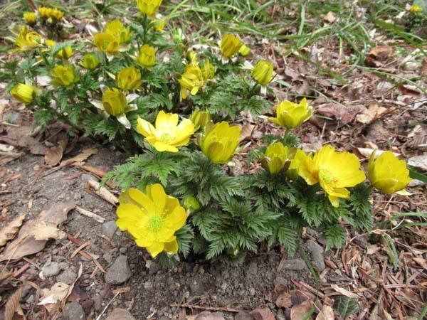 植物園 春の草花が咲き始めた_e0048413_20095018.jpg