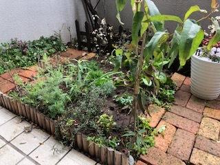 無農薬無化学肥料の畑は持続・・・。_b0181417_12174076.jpg