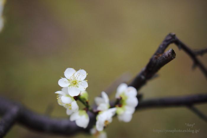 梅の枝とましかく_e0347431_22531671.jpg