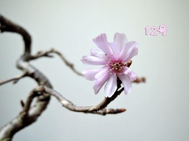 最後の秋つぼみ_c0062832_16505653.jpg