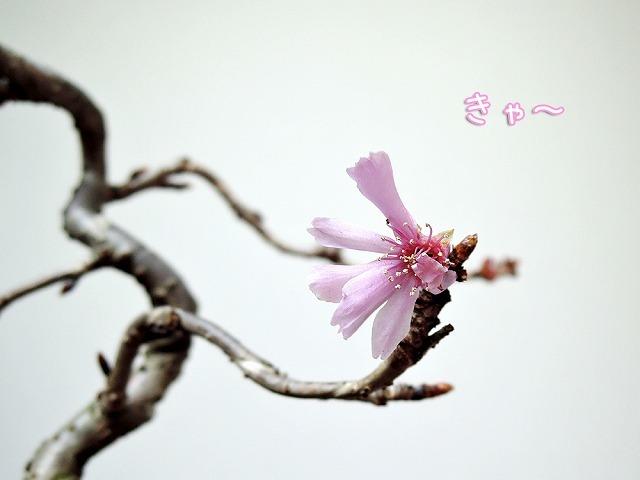 最後の秋つぼみ_c0062832_16505674.jpg