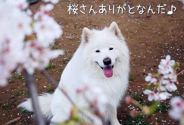 最後の秋つぼみ_c0062832_17102534.jpg