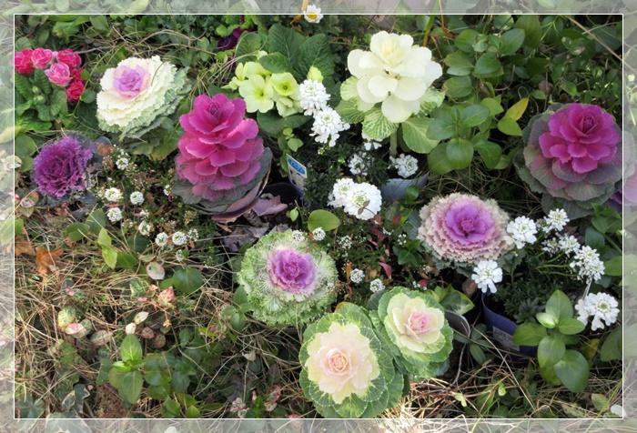【トロワグロのトーストと春の花と時代は埼玉県】_b0009849_923913.jpg