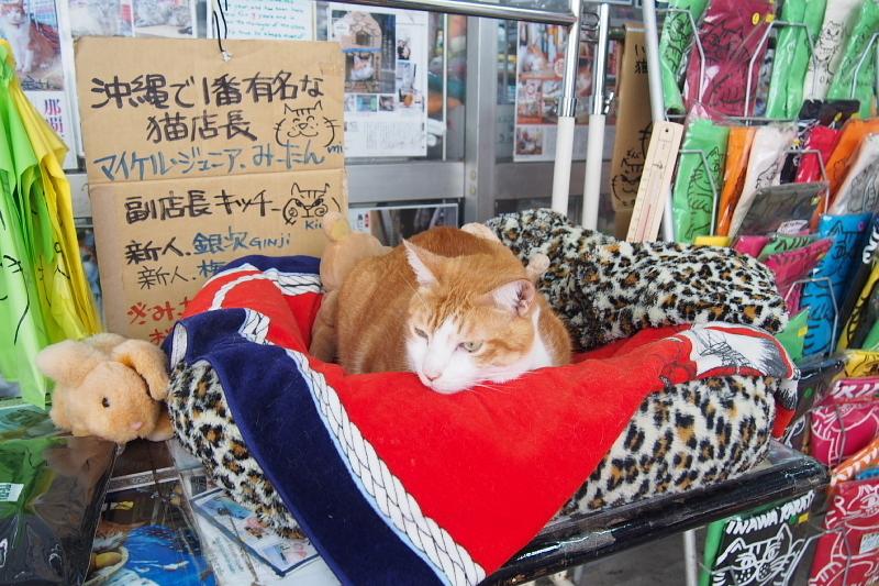 【沖縄で一番有名な猫店長】みーちゃんがいる嘉数商会@那覇_b0008655_14145621.jpg
