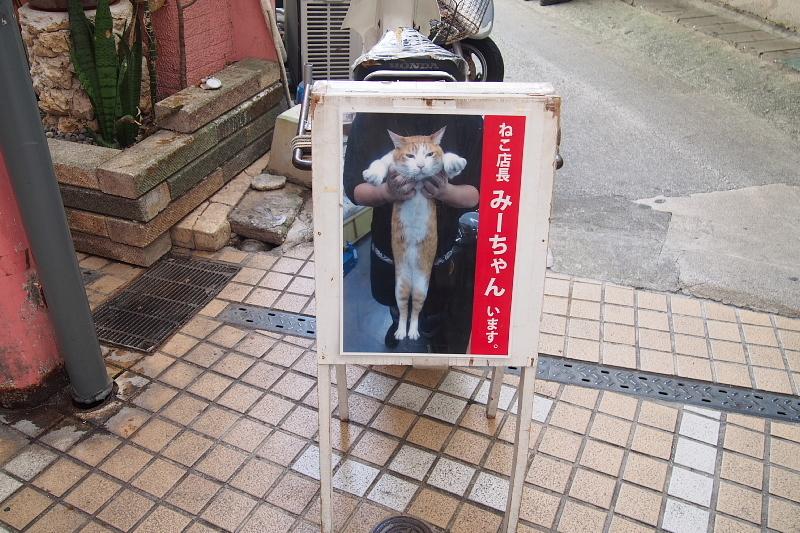 【沖縄で一番有名な猫店長】みーちゃんがいる嘉数商会@那覇_b0008655_14161972.jpg