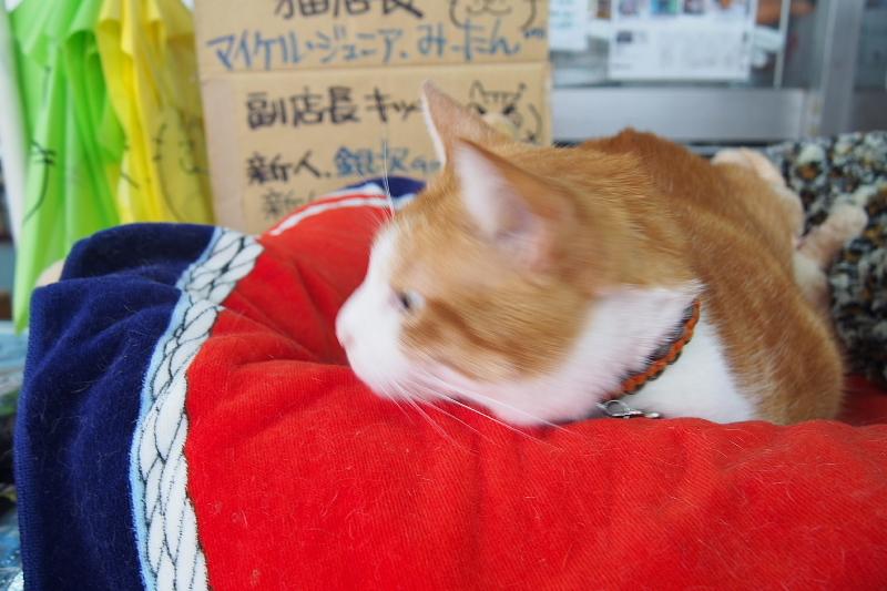 【沖縄で一番有名な猫店長】みーちゃんがいる嘉数商会@那覇_b0008655_14163824.jpg