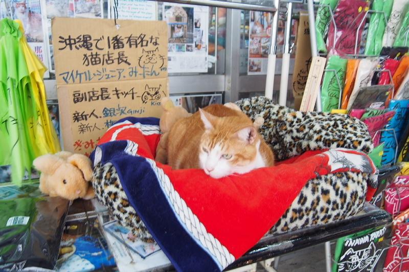 【沖縄で一番有名な猫店長】みーちゃんがいる嘉数商会@那覇_b0008655_14165361.jpg