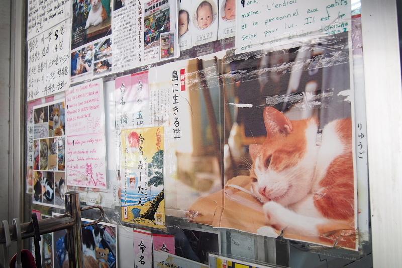 【沖縄で一番有名な猫店長】みーちゃんがいる嘉数商会@那覇_b0008655_14172980.jpg