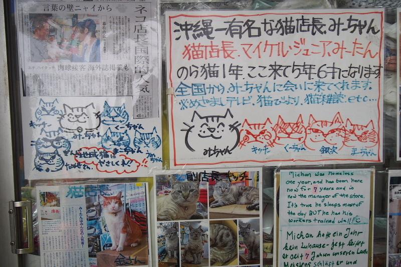【沖縄で一番有名な猫店長】みーちゃんがいる嘉数商会@那覇_b0008655_14173434.jpg
