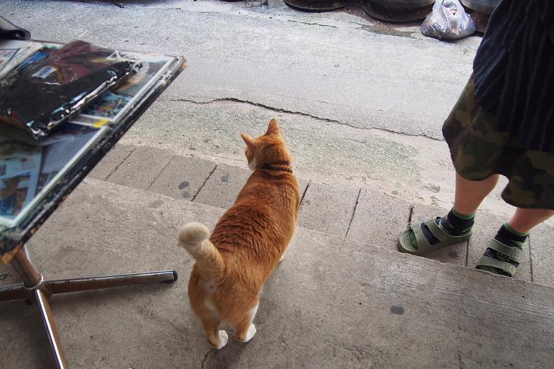 【沖縄で一番有名な猫店長】みーちゃんがいる嘉数商会@那覇_b0008655_14183902.jpg